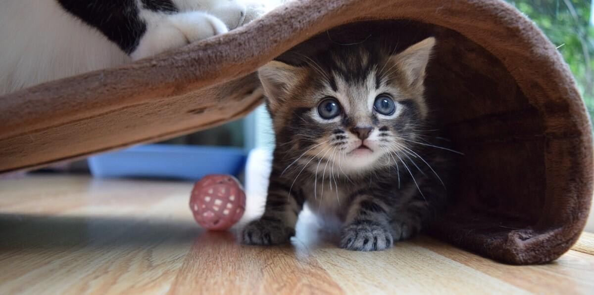 7df146e8c7 Een kitten opvoeden 2.0