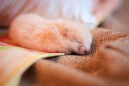 Hamster in winterslaap: weetjes en tips