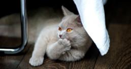 Nagelverzorging bij hond en kat
