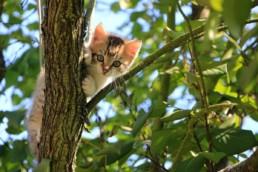 Kat voor de eerste keer naar buiten