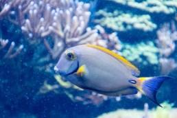 Oververhitting aquarium terrarium