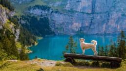 Vakantie met hond en kat: gebruik de vakantie checklist!