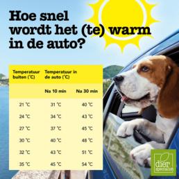 Hond in de auto hitte
