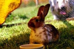 oververhitting konijn