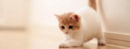 De kitten checklist: benodigdheden en tips!